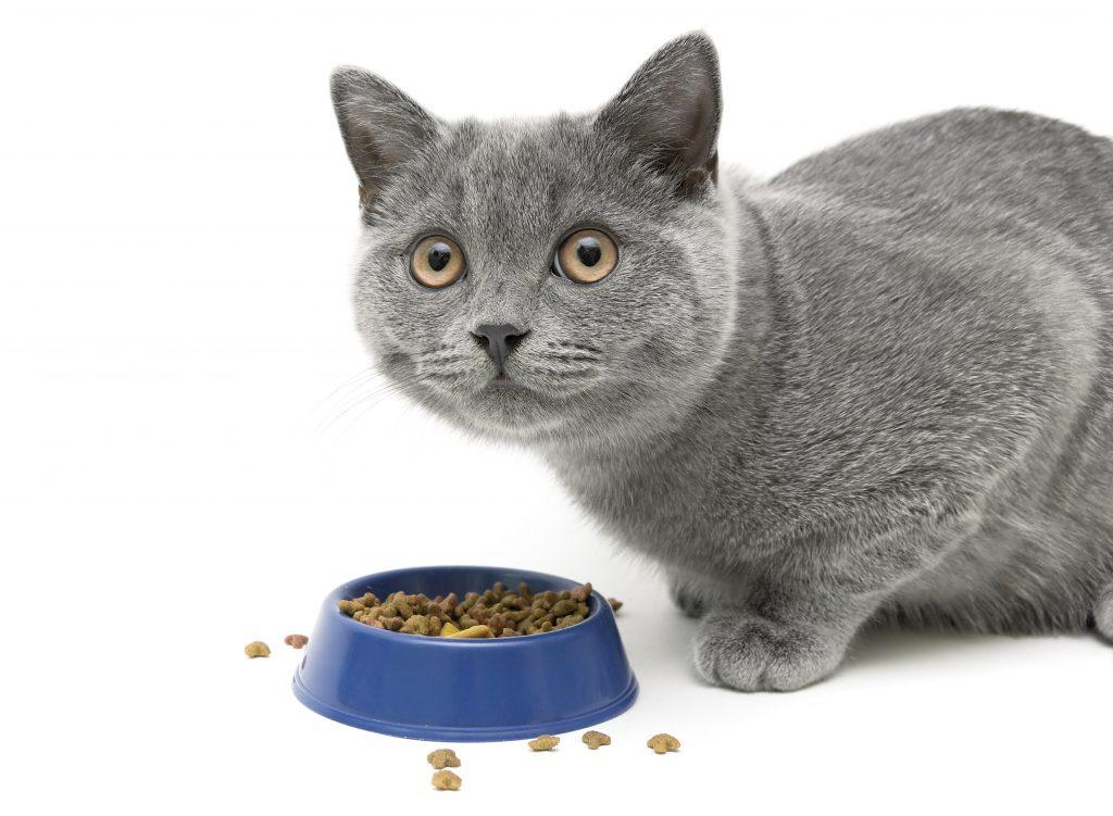 new pet cat