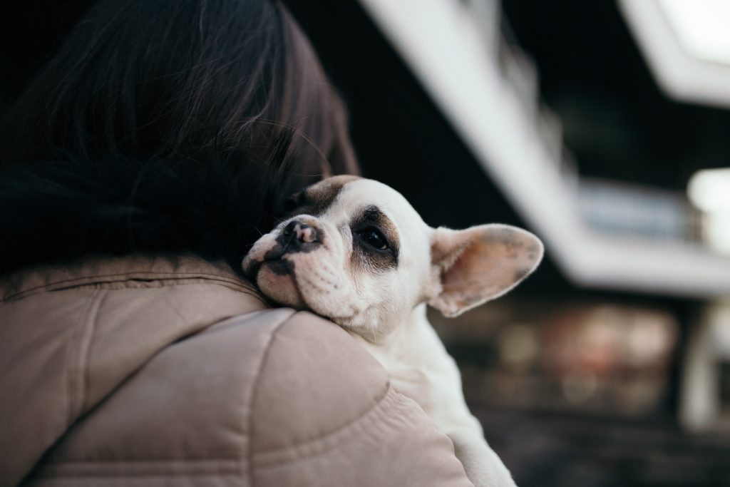 Is Kennel Cough Contagious From Dogs To Cats