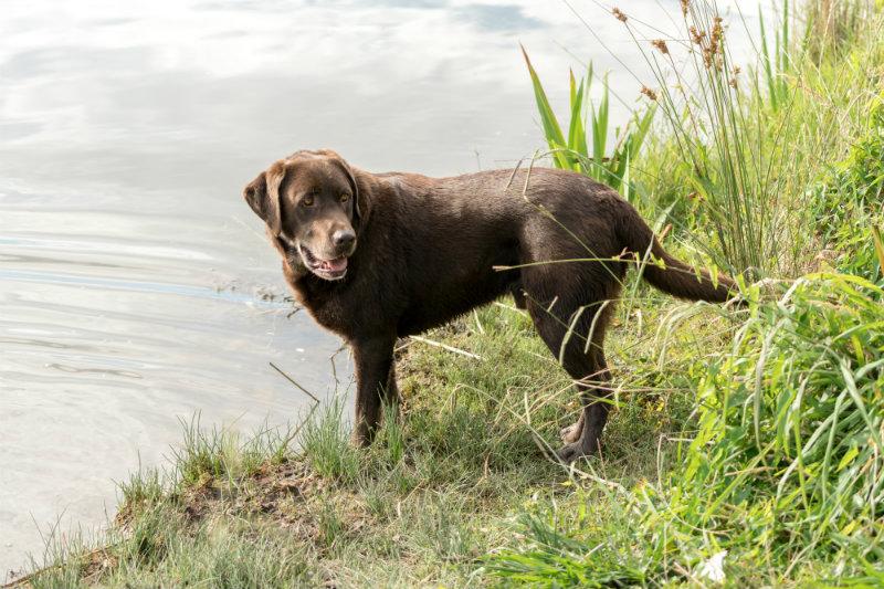 dog-blog-tail