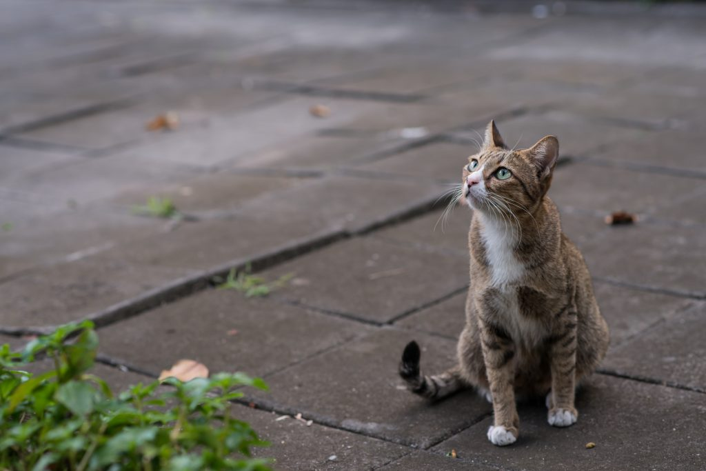 kitty-outside