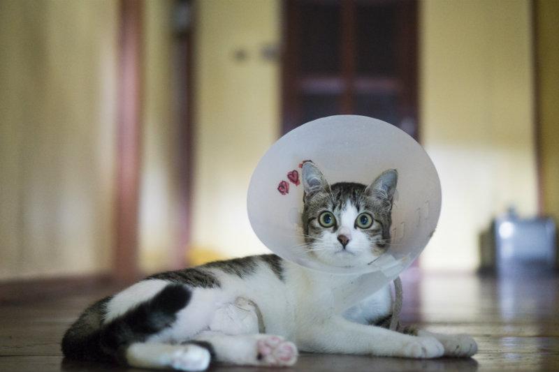 cat-in-cone