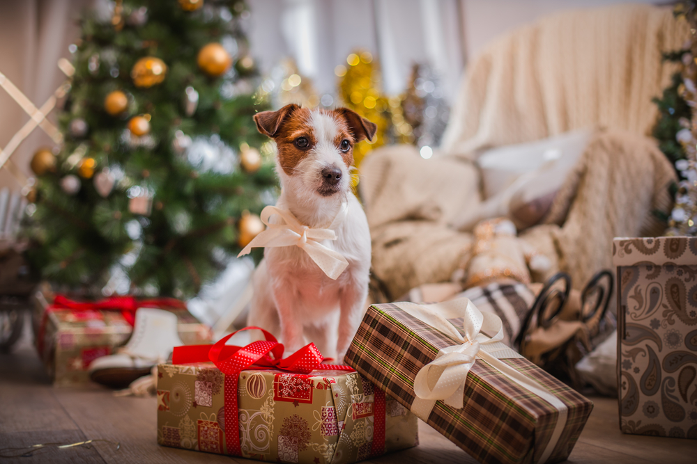 Dog surrounded by gifts and a Christmas tree in the background