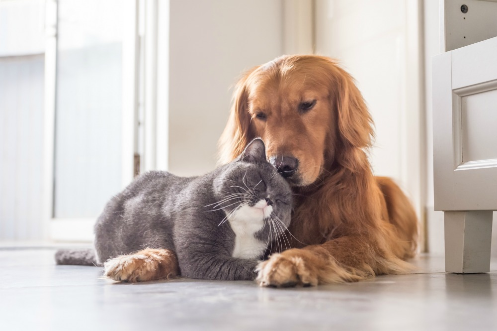 Cat leaning against dog indoors