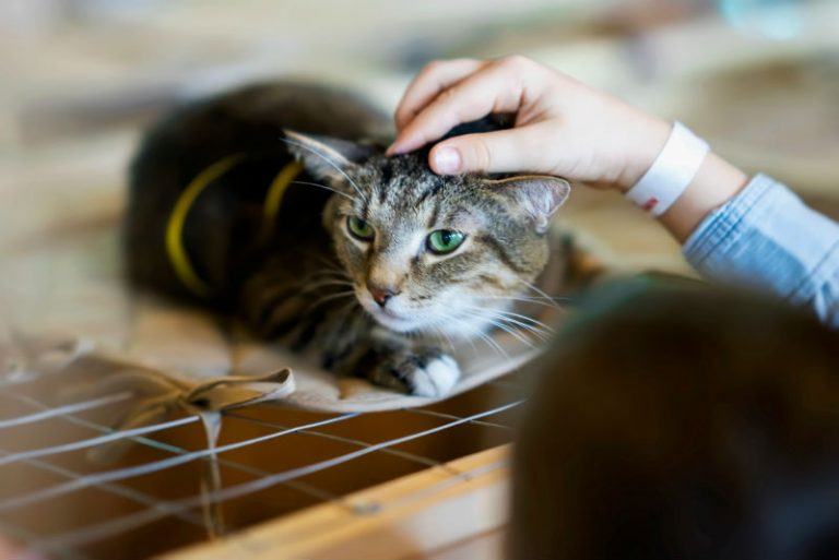 Girl petting cat
