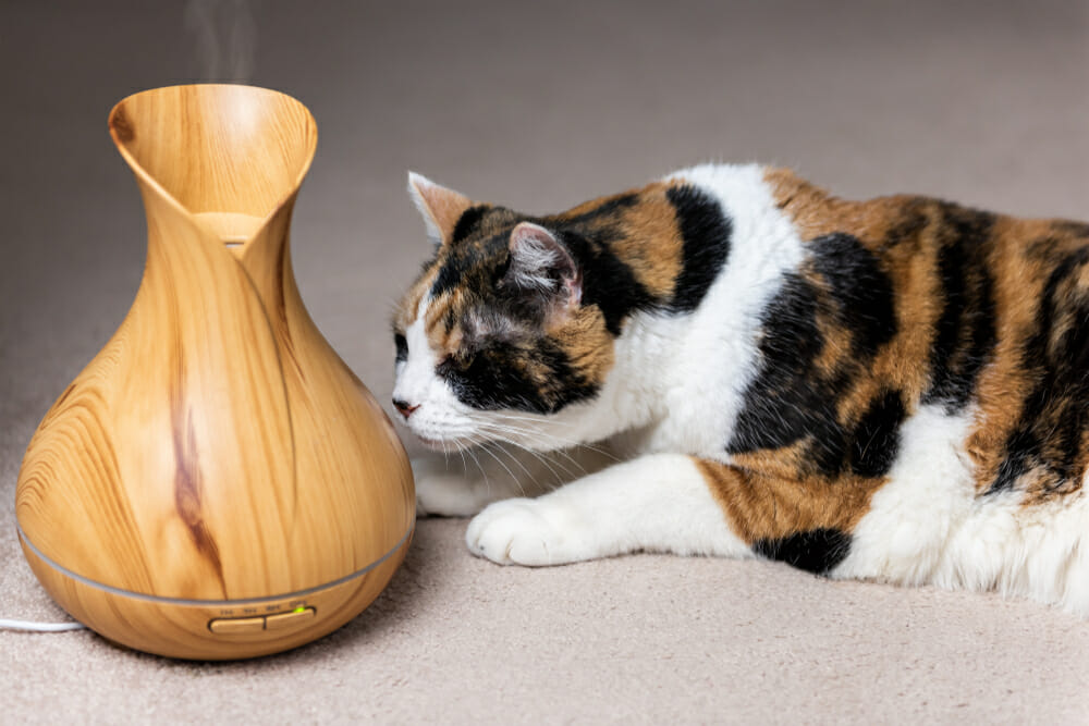 Cat smelling a diffuser