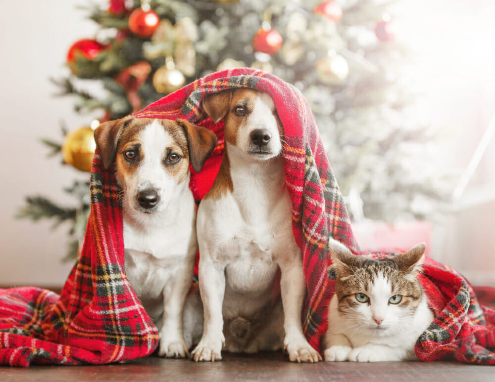 cat dog christmas